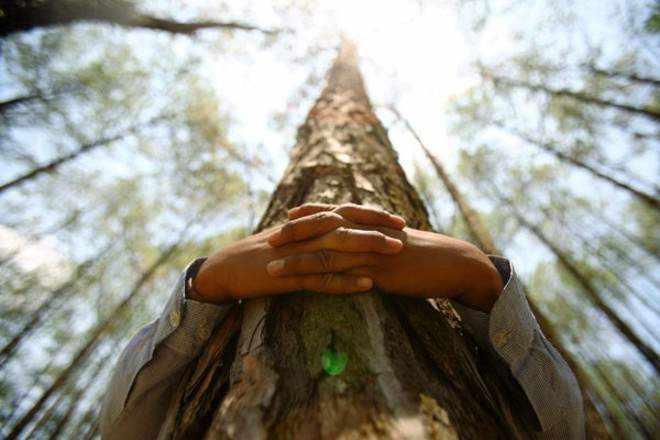тяга к деревьям