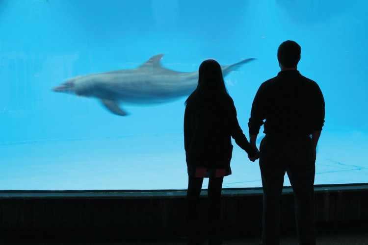 Первое свидание в дельфинарии