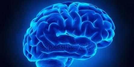 мозгу 35-45 лет